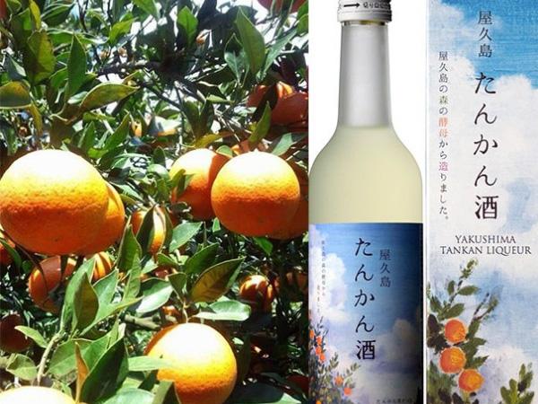【島News】町と酒造メーカーが共同開発。特産品を使ったリキュール「屋久島たんかん酒」島内限定販売