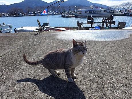 6島にはたくさんの猫が 来島者を和ませている