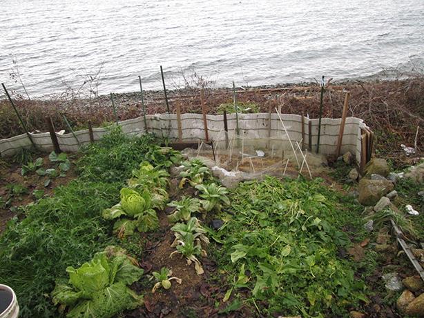 3波打ち際まで迫る島の畑。淡水湖ならではの風景