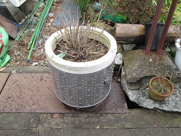 5洗濯機のドラムが植木鉢に変身