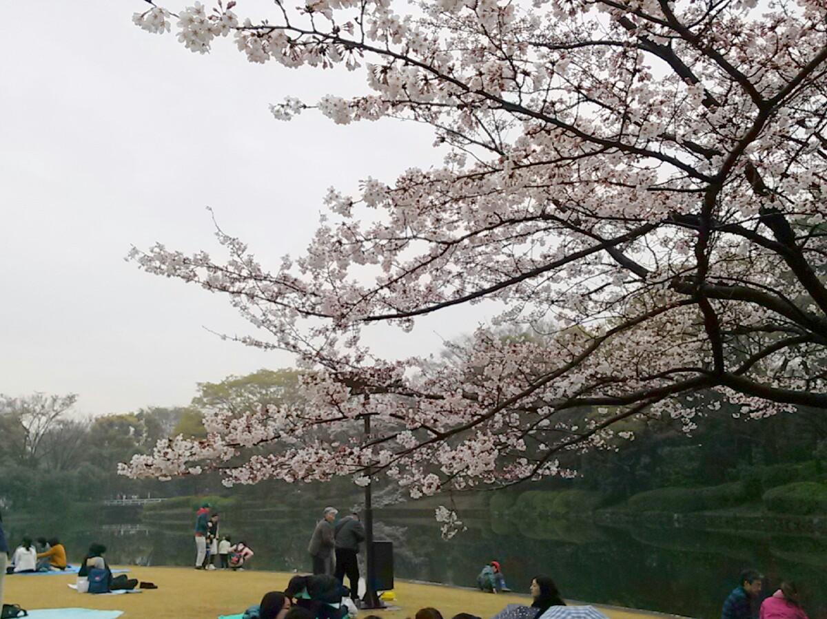 kokutouhanami_2
